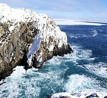 Off Bonavista Point by Annlynn Ward