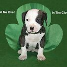 Happy Saint Patricks Day by Ginny York