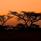 Bush Sunset by Vickie Burt