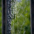 Spider Web Dew by Shayna Sharp
