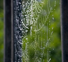 Spider Web Dew by Shayna Sharp