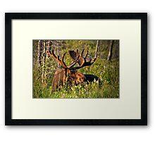 Moose In Meadow Framed Print