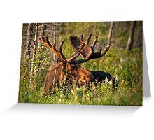 Moose In Meadow Greeting Card