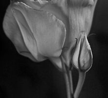 Lisianthus Monochrome by Dianne English