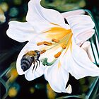 """Natural Seduction"" - large lily painting with a bee by James  Knowles"