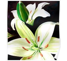 """""""English Lilies"""" - white lilies Poster"""