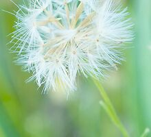About to blow in the wind by MIchelle Thompson