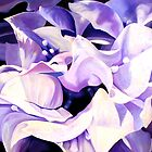 """Dancing Bugambilia"" - purple bougainvillea blossoms by James  Knowles"