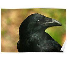 Raven, totem bird ... Poster