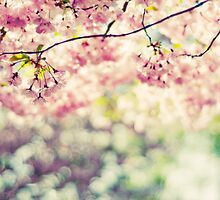 Cherry Tree in bloom by mariakallin