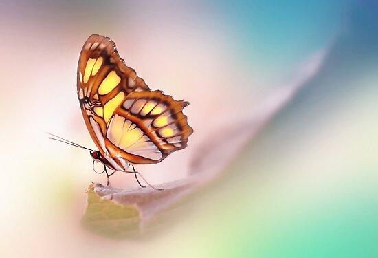Malachite Butterfly by Lyn Evans