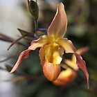 Orchid by PhotosByHealy
