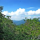 Blue Ridge Mountain View by Glenn Cecero