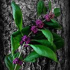 Beautyberry by Jennifer Weitzel