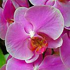 Purple Orchid. by Lee d'Entremont