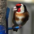 Goldfinch by SWEEPER