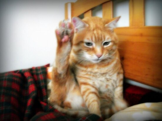 Ok, High 5, bro... ¬¬ by Maria  Gonzalez