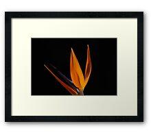 Bird of Paradise 1093 Framed Print