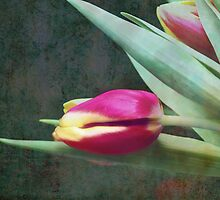 Tulip by RosiLorz