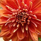Fall Mum by BLemley