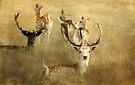 ~ Oh Deer! ~ by Lynda Heins