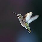 Hummer2 by onnibright
