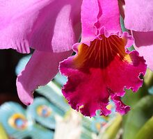 Cattleya Orchid - Detail by reflector