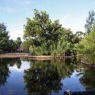 Lagoon Reflection #2 at Werribee Zoo by Ian Williams