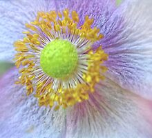 Center of beauty by Karen  Betts