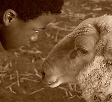 man vs sheep by ngonielyn