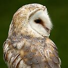 Barn Owl Profile by Mark Hughes