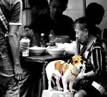 a dog in man's world by Tashique Alam