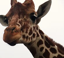Giraffe Glancing at Me by MichelleRees