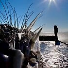 A Beautiful cold day by imagic