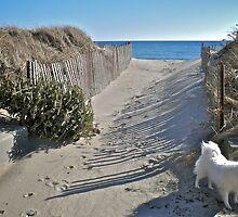 Winter Beach Christmas Tree - Series 2011 by Jack McCabe