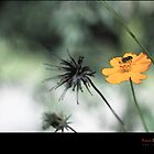 Love Flower and Nature by HamimCHOWDHURY