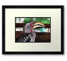 Hornbill says hallo! Framed Print