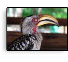 Hornbill says hallo! Canvas Print