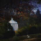 Soft Evening Light by Judi Taylor