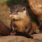Otters by Mark Hughes
