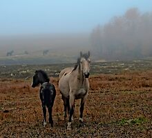 A Misty Morning  by peaceofthenorth