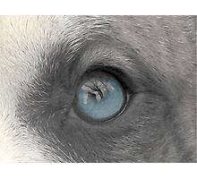 A Dogs Eye View - A Look Inside Photographic Print