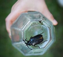 Child holding large bug in glass by Camille Wesser