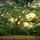 The Ruskin Oak by Jonicool