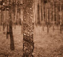 natural resources - rubber tree by zafrulismail
