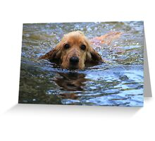 Cocker Spaniel In His Element Greeting Card