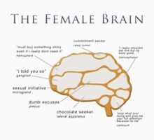 The Female Brain by Steven  Sandner