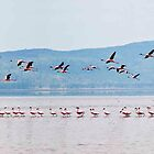 Flamingo panorama 2 by Malcolm1841