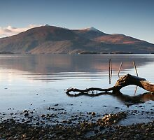 Lone Branch, Lough Leane by Paul McSherry