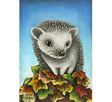Little hedgehog on a big pile of leaves Photographic Print